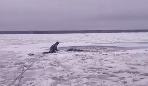 В Нижегородской области местные жители спасли лося, который провалился под лёд