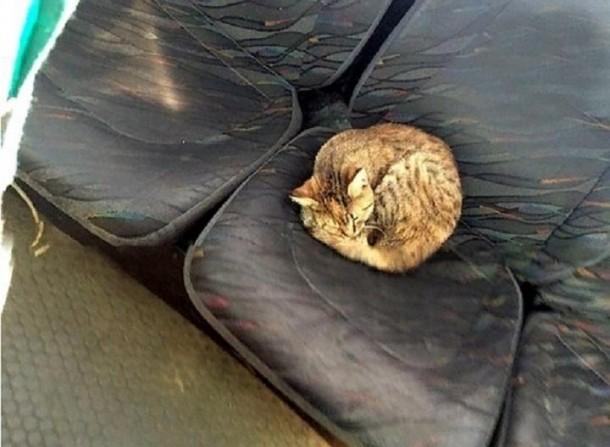 Бездомный кот «зайцем» катается в общественном транспорте Ростова