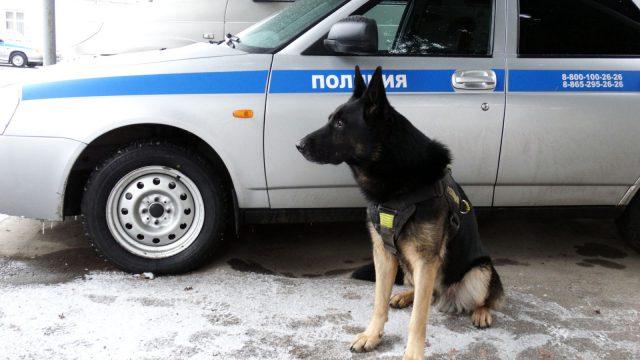 Служебная собака помогла полицейским обнаружить крупную партию наркотиков на Ставрополье