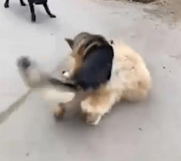 В Сети требуют завести уголовное дело на Гуфа за травлю собаки