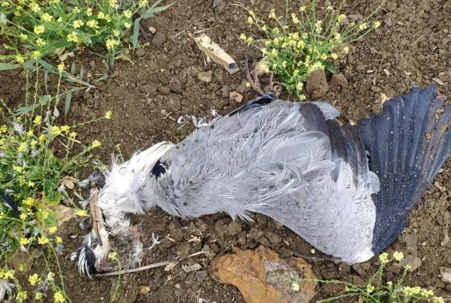 Мертвых рыб и птиц обнаружили на Новомарьевском лимане