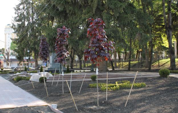 В Кисловодске высадили саженцы красного клена