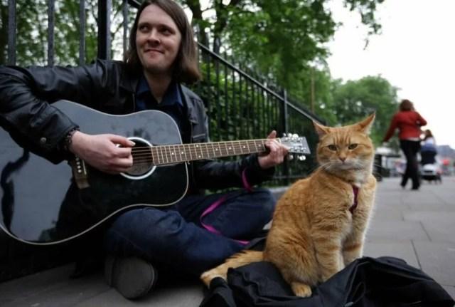 Ушел из жизни известный уличный кот по кличке Боб