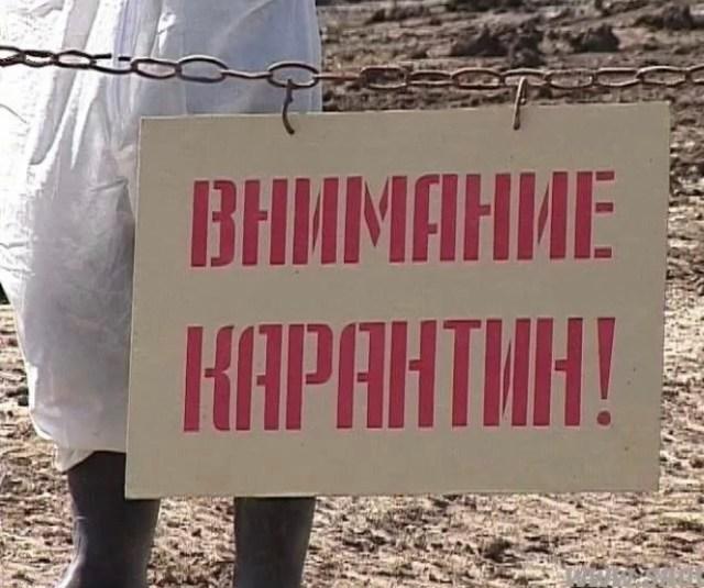 В селе Андроповского района ввели карантин по бешенству