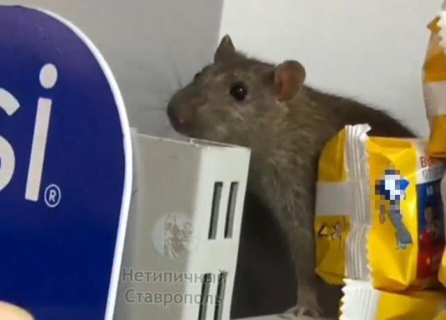 Бегающая по прилавку крыса возмутила покупателей в Ставрополе