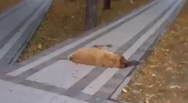В Железноводске ищут живодеров, жестоко расправившихся с бездомной собакой