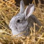 Мужчина украл у пенсионерки кроликов на Ставрополье