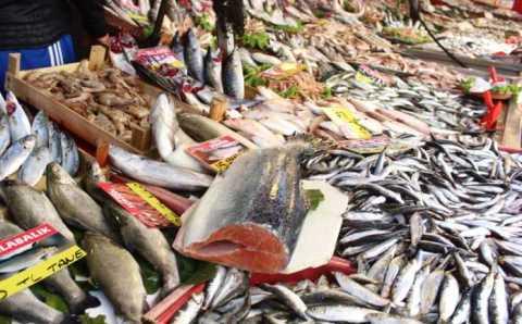 Все больше турецкой рыбы уходит на экспорт