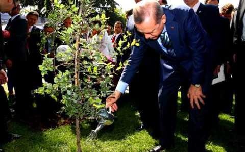 Новая президентская акция сделает Турцию еще зеленее