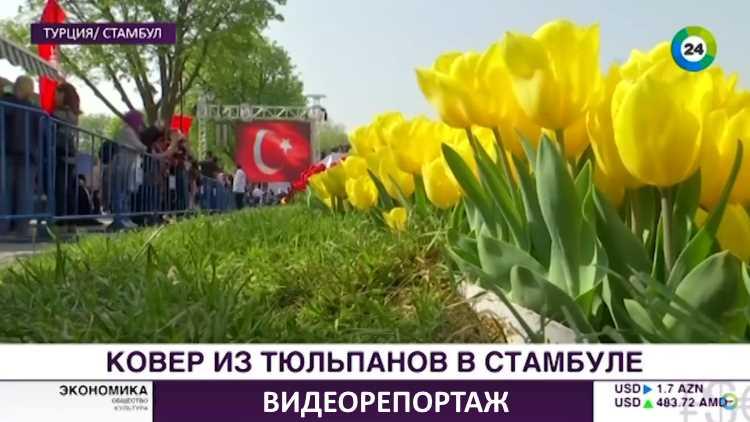 Самый большой в мире ковер из тюльпанов