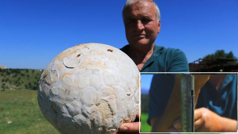 Мужчина нашел 5-килограммовый гриб в Кастамону