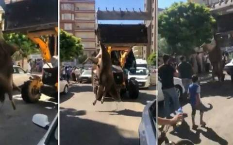 Тройной штраф за издевательство над быком