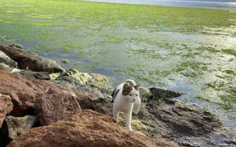 Позеленевшее побережье Измира