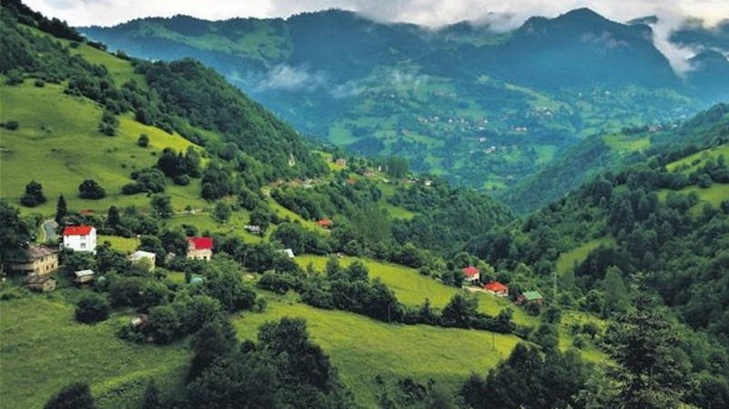 30% площади Турции будут под лесами