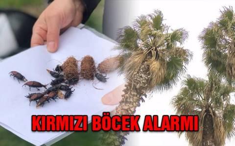 Стамбульские пальмы под угрозой исчезновения