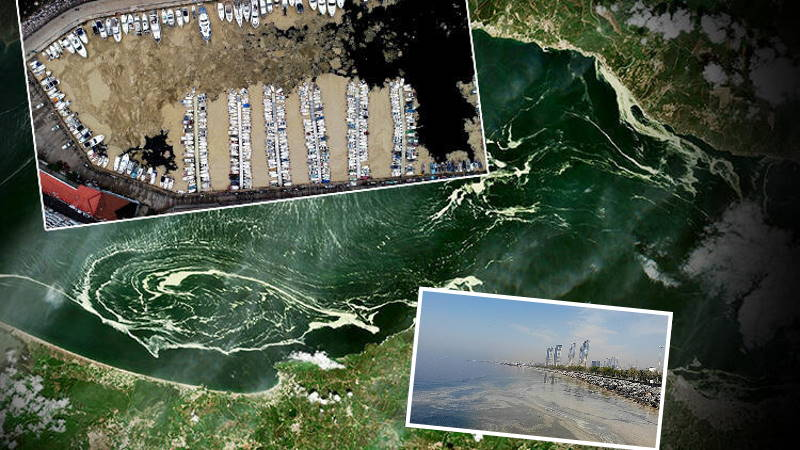 Проблема слизи в Мраморном море растет с каждым днем