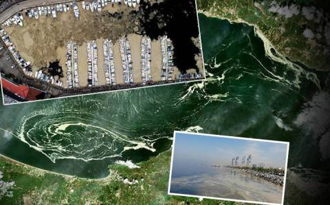 «Морские сопли» – текущая проблема Мраморного моря