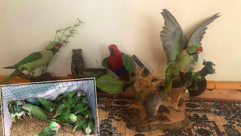 Житель Стамбула выращивал попугаев для чучел