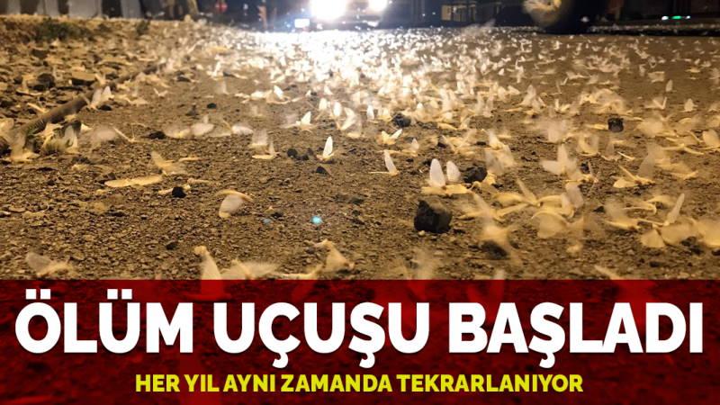 Ежегодный «смертельный полет» стартовал в Ардахане