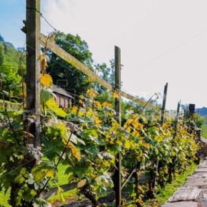 Pfarrgarten Oberwesel-9434 - News vom Rhein