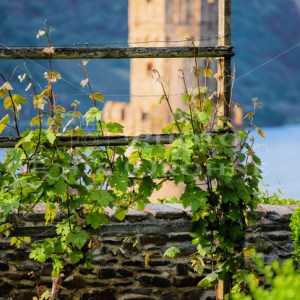 Pfarrgarten Oberwesel-9474 - News vom Rhein