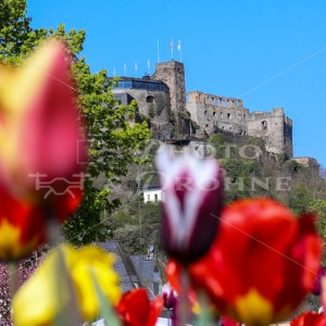 Die Burg Rheinfels im Frühling in Sankt Goar - News vom Rhein