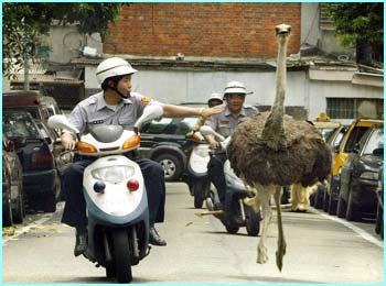 run emu run