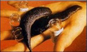 Leeches, c/o Biopharm