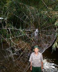 Giant spider web (Ingi Agnarsson et al)