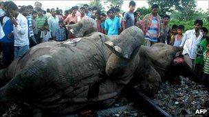 Train kills elephants