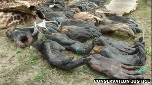 Confiscated illegal body parts from the raids