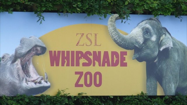 Image result for whipsnade zoo image