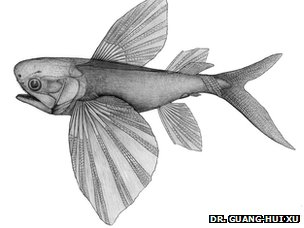 Potanichthys xingyiensis reconstruction illustration