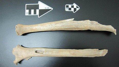 Leg bones from Tianyuan Cave
