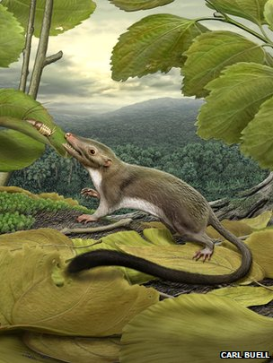 Early mammal, lived alongside the dinosaurs.