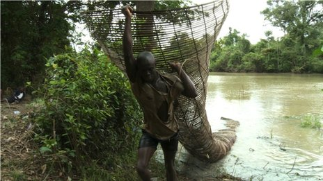 Niger Delta fisherman carries net laden with fish out of a creek