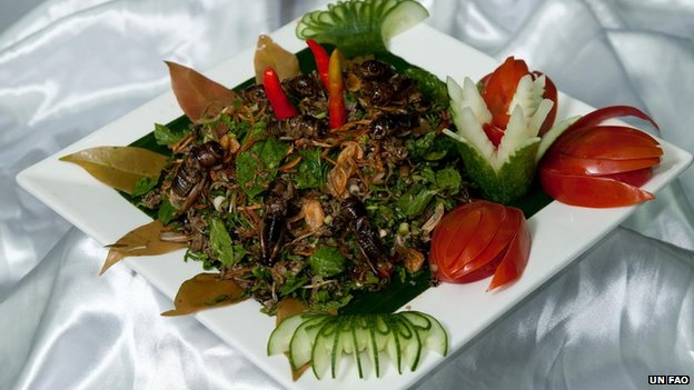 Bug salad