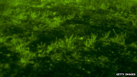 A view of grass through night vision goggles