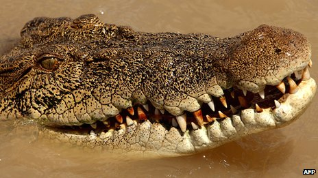 File picture of an estuarine crocodile, better known as the saltwater or saltie, in the Adelaide river near Darwin in Australia's Northern Territory