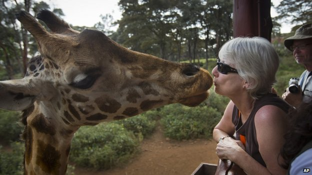 A giraffe eats a food pellet from the mouth of a foreign visitor at the Giraffe Centre, in the Karen neighborhood of Nairobi, Kenya Monday 30 September 2013