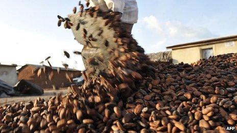 A farmer gathers cocoa beans in Ivory Coast on 17 November 2010