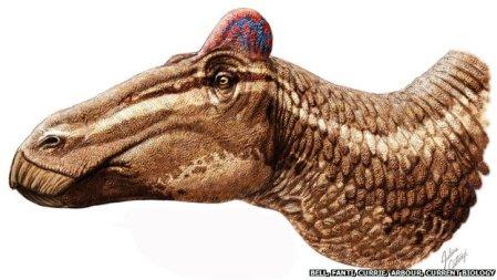 Edmontosauraus regalis illustration