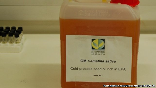 2.5 Litres of GM Camelina oil