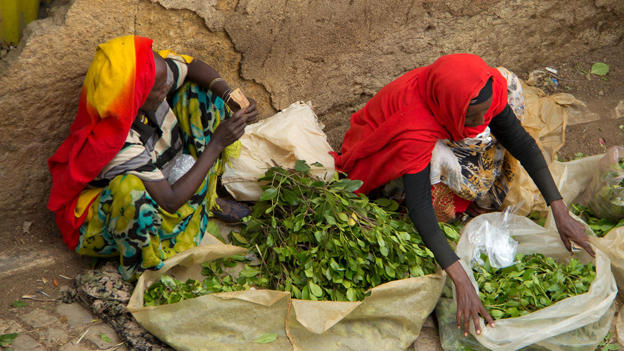 Khat sellers in Harar