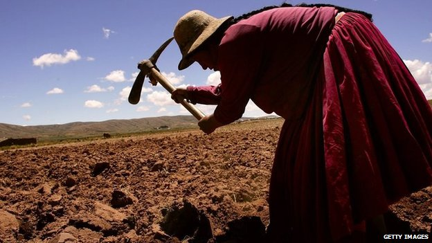 Paulina Momoni tills a field before planting December 12, 2005 in Curva, Bolivia.