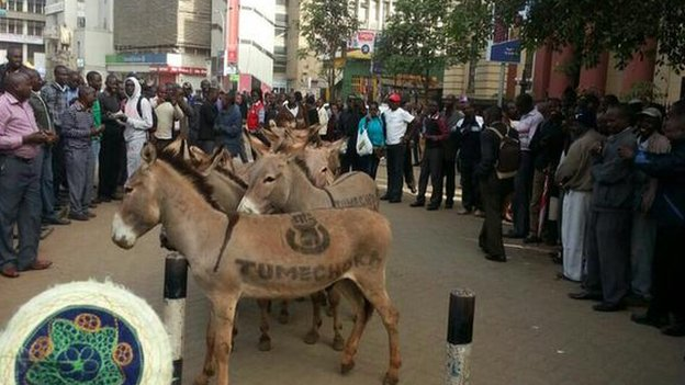 A crowd of people surrounding the donkeys