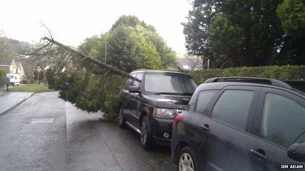 Tree on road at Dalry, Ayrshire