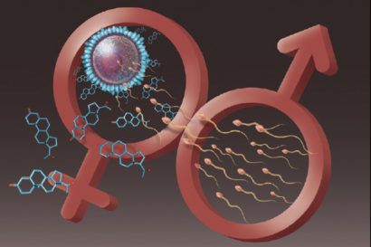 hormones regulate fertilization