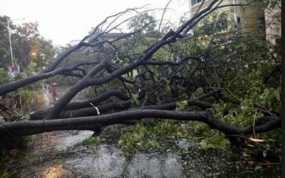 Cyclone Devastation