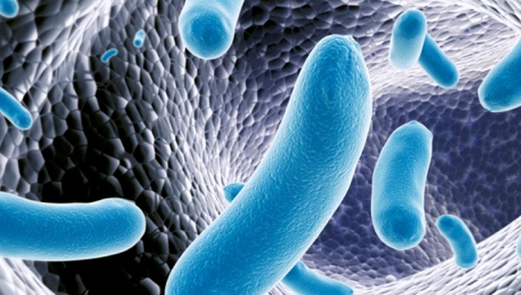 salmonella-typhi-responsavel-pela-febre-tifoide_624173